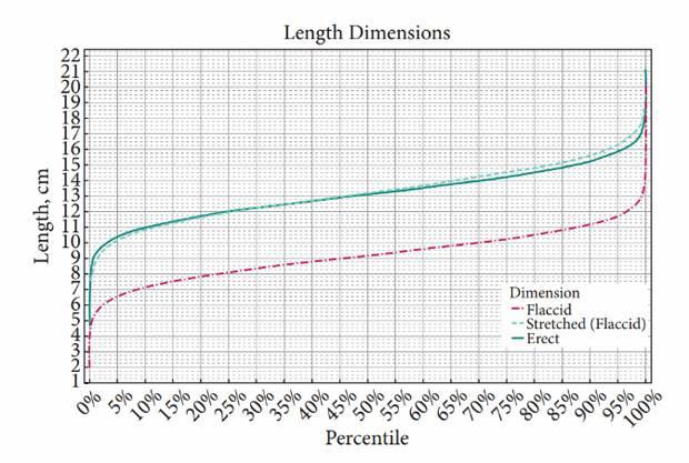 Средний нормальный размер полового члена
