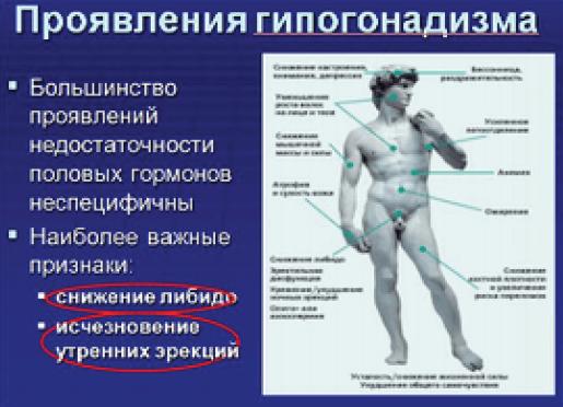 Пролактин у мужчин. норма гормона по возрасту, таблица, что значит повышенный, причины, как снизить