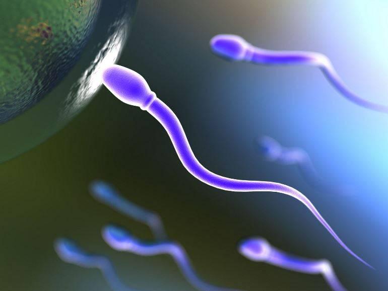 Состав спермы
