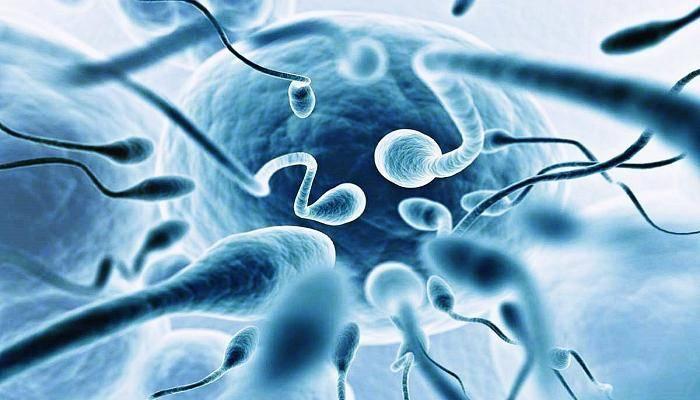 Улучшаем качество спермы: что влияет на спермограмму?