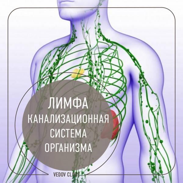 Есть ли лимфоузлы на спине: расположение лимфатических узлов в теле человека