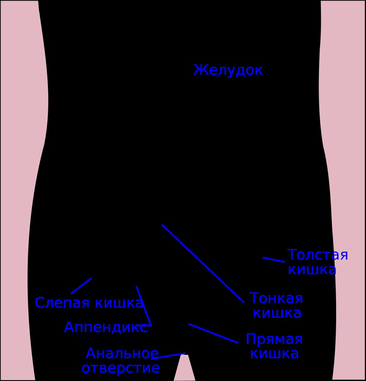 Папиллома заднего прохода: лечим весь организм комплексно