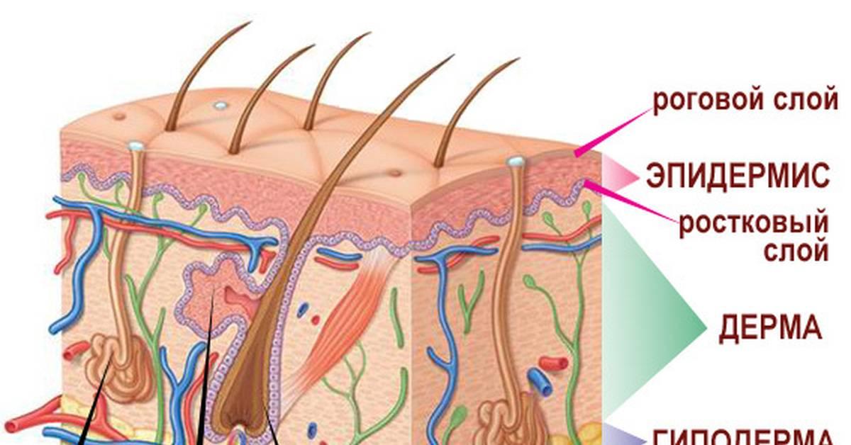 Крем от псориаза: топ-7 лучших гормональных и негормональных средств для лечения заболевания (70 фото)