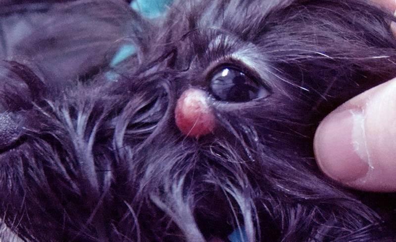Папиллома на носу у ребенка: как избавиться и обработать рану