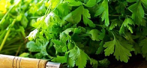 Зелень для потенции мужчин: обзор полезных трав