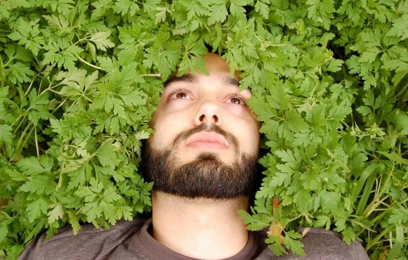 Петрушка и потенция мужчин: влияние растения, рецепты и противопоказания
