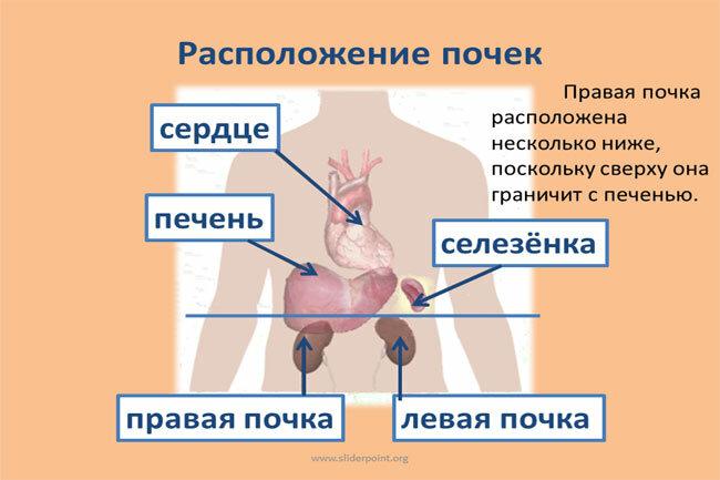Причины, симптомы и лечение нефроптоза правой почки