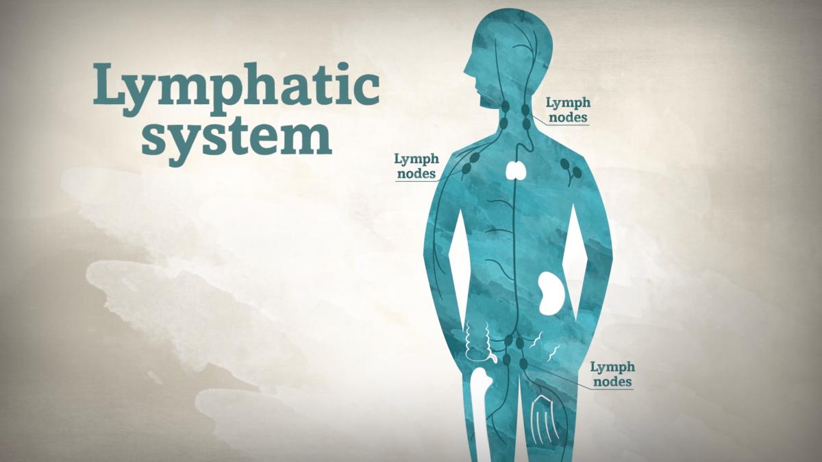 Что такое лимфоузлы: расположение, функции, норма и патология